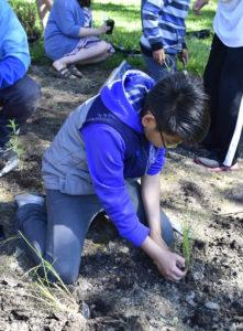 Sennett MS rain garden planting