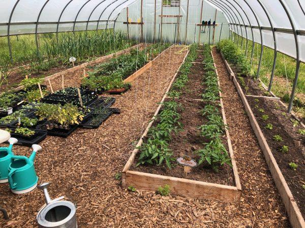 Raised garden beds in hoop house