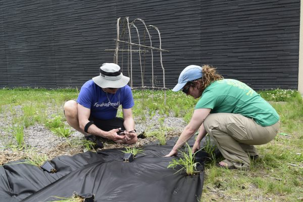 Two people crouch, planting plants into landscape fabric with branch tunnel in background.