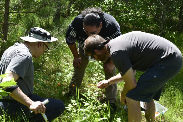 Three men huddle around quadrat, examining vegetation on groundlayer, in sunny open woodland setting