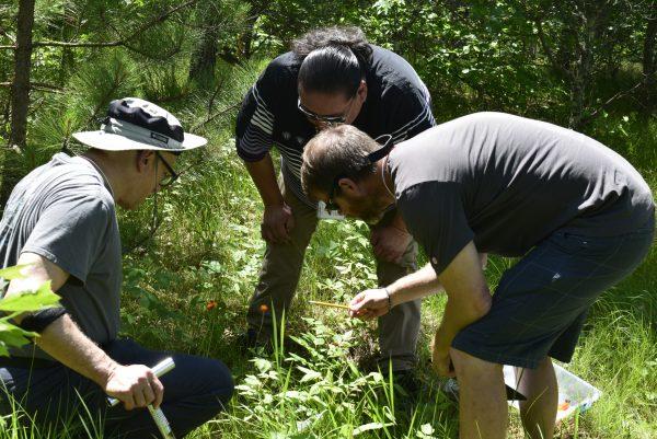 Three men huddle around quadrat, examining vegetation on groundlayer, in sunny open woodland setting
